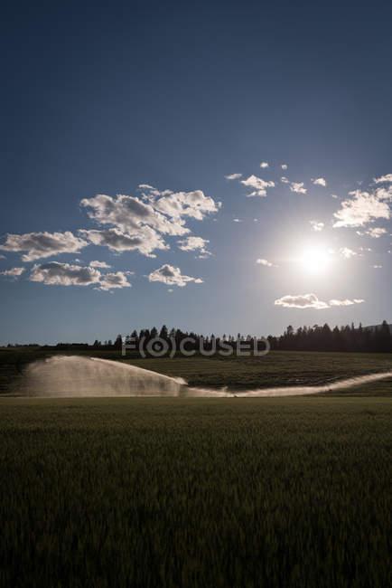 Grüne Wiese auf dem Land — Stockfoto