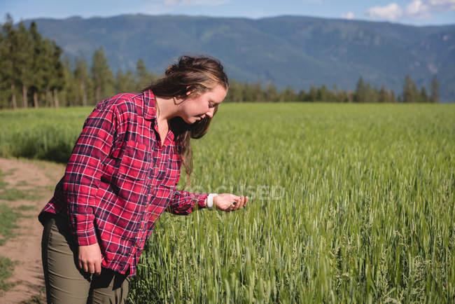 Frau betrachtet an einem sonnigen Tag die Ernte auf dem Feld — Stockfoto