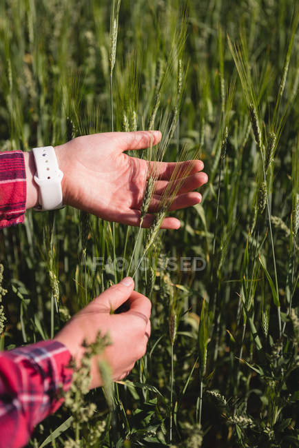 Woman holding crops in the field — Stock Photo