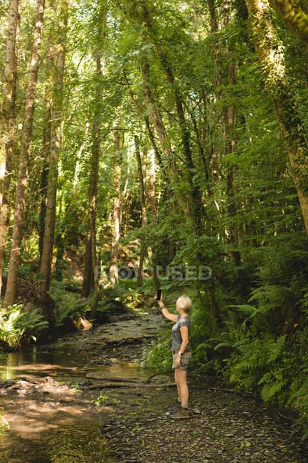 Donna che cattura selfie con il telefono cellulare nella foresta — Foto stock
