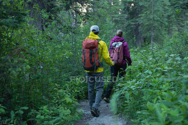 Vue arrière de la randonnée en couple dans la forêt — Photo de stock