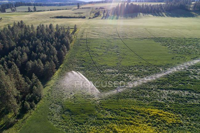 Пташиного польоту зеленому полі в сільській місцевості — стокове фото