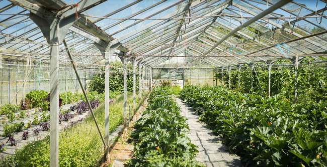Interior view of modern greenhouse — Stock Photo