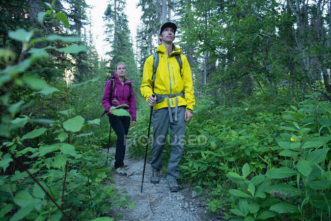 Couple hiking in the forest — Stock Photo