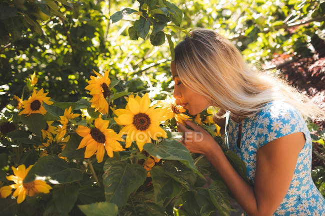 Young woman smelling sunflower in the garden — Stock Photo