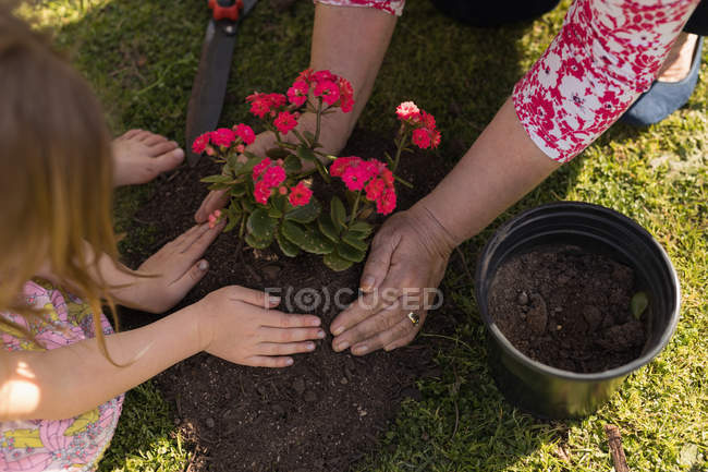Close-up of grandmother and granddaughter planting in the garden — Stock Photo