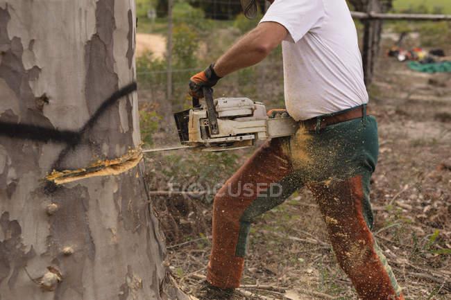 Coupe de bûcherons dans la forêt à la campagne — Photo de stock