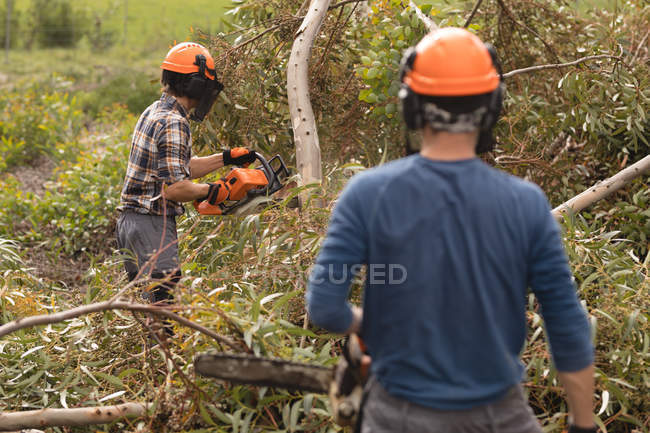 Two lumberjacks with chainsaw cutting fallen tree in forest — Stock Photo