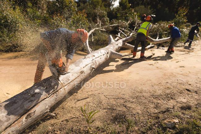 Лісоруби різко впало дерево в лісі в сільській місцевості — стокове фото