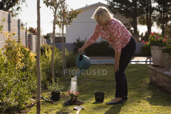 Senior woman watering plant in the garden on a sunny day — Stock Photo