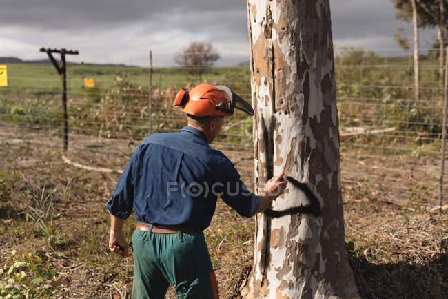 Задній вид Дроворуб перевірка дерева в лісі — стокове фото