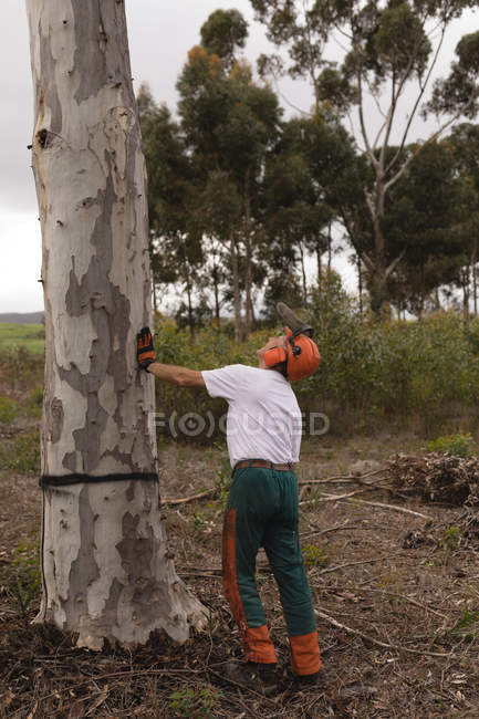 Rear view of lumberjack cutting tree in the forest — Stock Photo