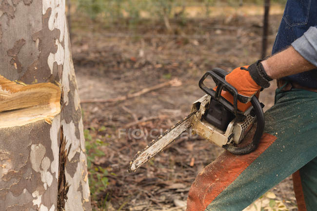 Mid section of lumberjack with chainsaw cutting tree trunk in forest — Stock Photo