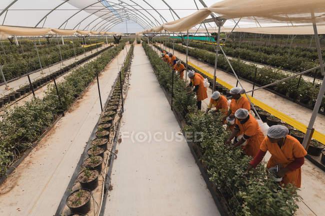 Висока кут зору працівників збір чорниці, чорничний фермі — стокове фото