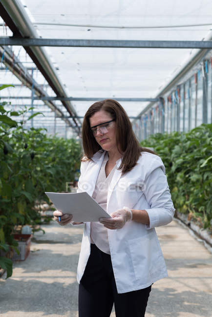 Female scientist checking document in greenhouse — Stock Photo