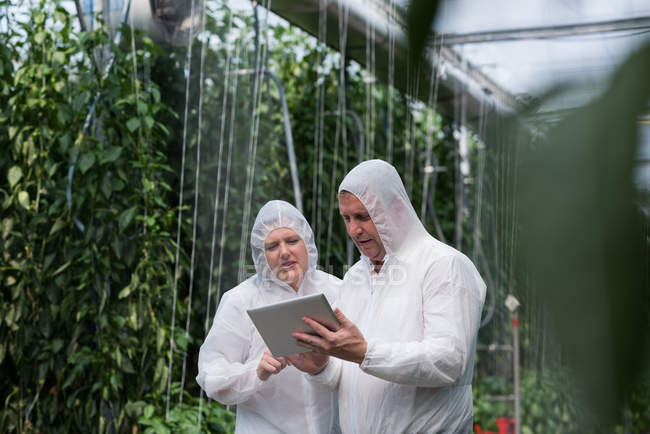 Two scientists working on digital tablet in greenhouse — Stock Photo