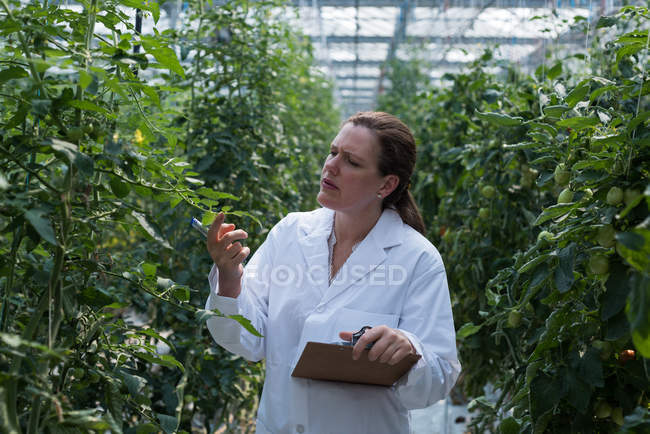 Femelle Scientifique examinant des plantes en serre — Photo de stock