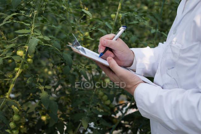 Recortada la visión del científico escrito en portapapeles en invernadero - foto de stock