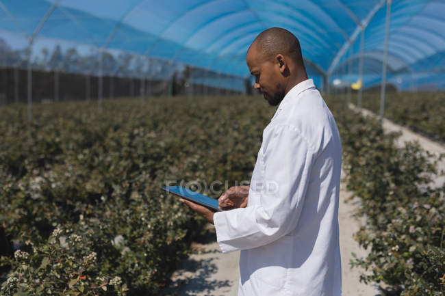 Side view of man using digital tablet in blueberry farm — Stock Photo