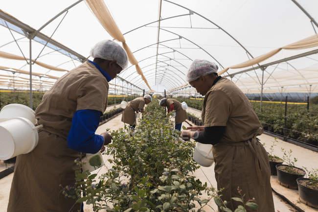 Жіночий працівників, що працюють в Чорниця ферма — стокове фото