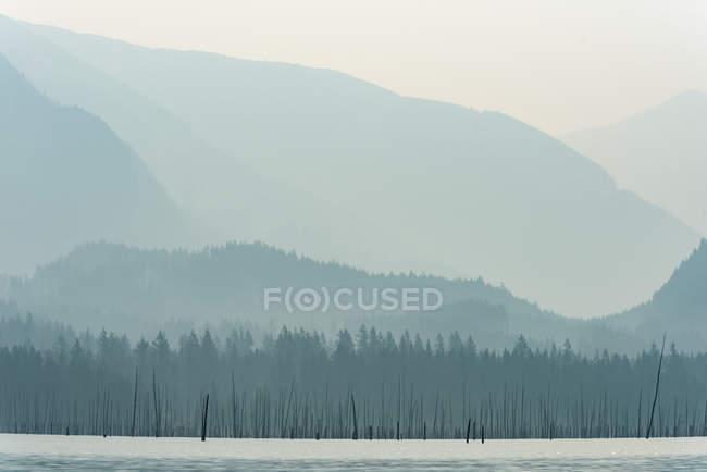 Пейзаж красивой реки и гор с покрытыми туманом лесами — стоковое фото