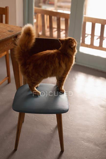 Кот, стоящий на стуле дома — стоковое фото