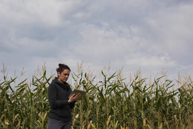 Жінка, використовуючи цифровий планшетний в поле кукурудзи — стокове фото