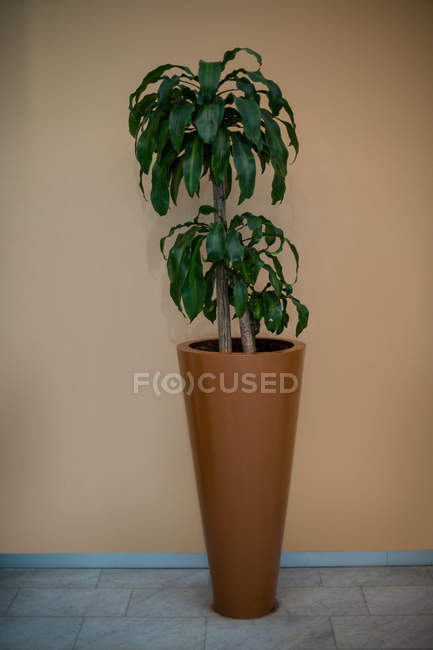 Close-up of pot plant on the floor — Stock Photo