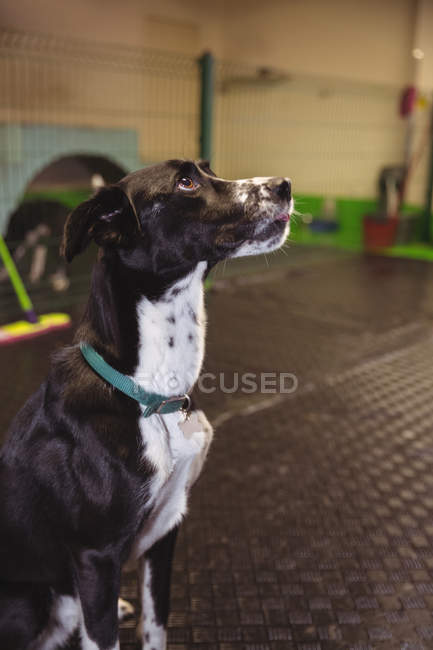 Black dog sitting on floor and looking up at dog care center — Stock Photo