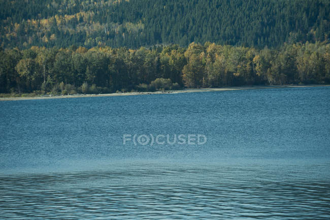 Scenic view of river water and green forest — Stock Photo