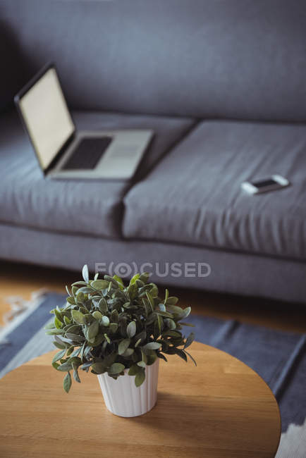 Close up of pot plant in living room at home — Stock Photo