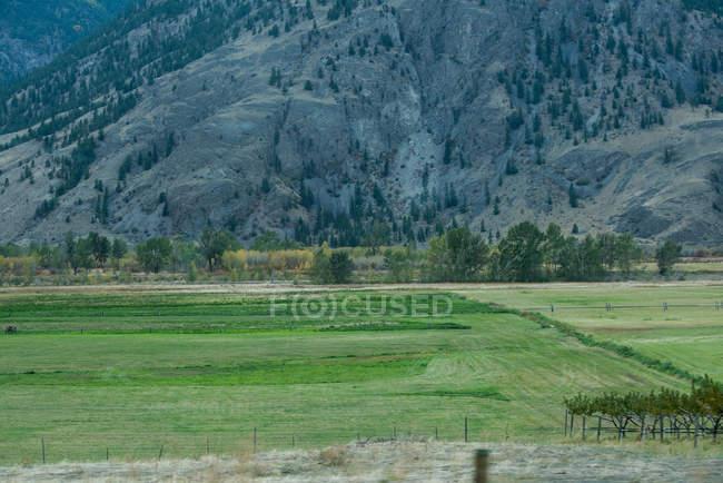 Vista tranquila de campo verde e montanha — Fotografia de Stock