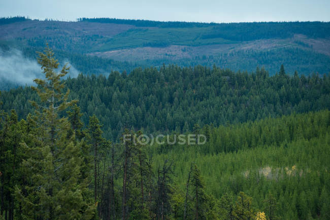 Scenic view of trees in green forest — Stock Photo