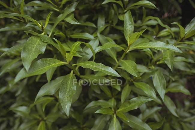 Close-up de folhas verdes na planta — Fotografia de Stock