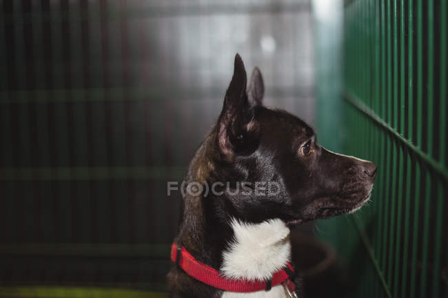 Curious dog in cage at dog care center — Stock Photo