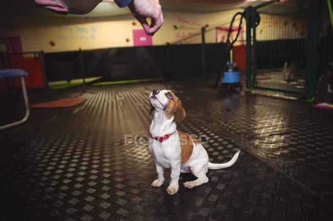 Man feeding rat terrier dog at dog care center — Stock Photo