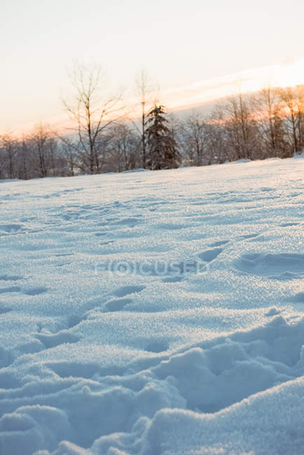 View of snow covered landscape during winter — Stock Photo