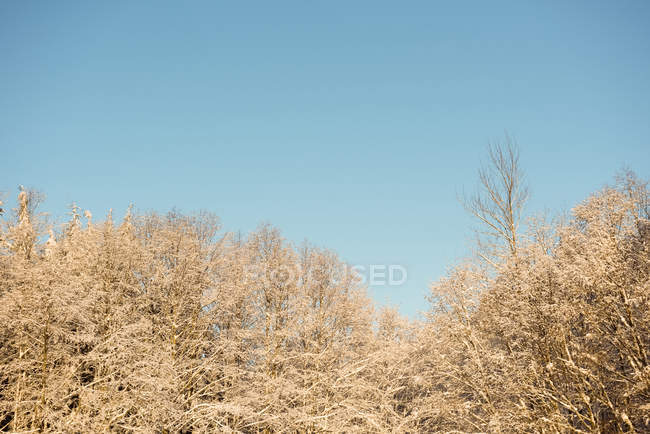 Blick auf Bäume im Wald gegen den Himmel am Tag — Stockfoto