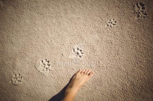 Следы на песке пляжа и женской ноги — стоковое фото