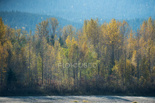 Majestic view of trees in green forest — Stock Photo