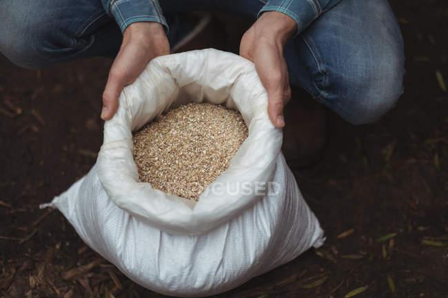Mano sosteniendo un saco de cebada para preparar cerveza en casa cervecería - foto de stock