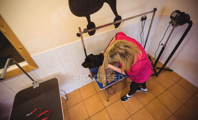 Overhead view of woman wiping dog with towel at dog care center — Stock Photo