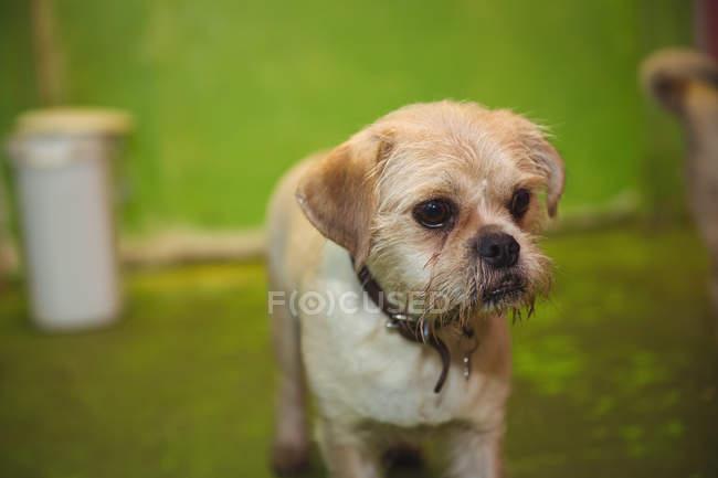 Закри тер'єр щеня собака догляд центр — стокове фото