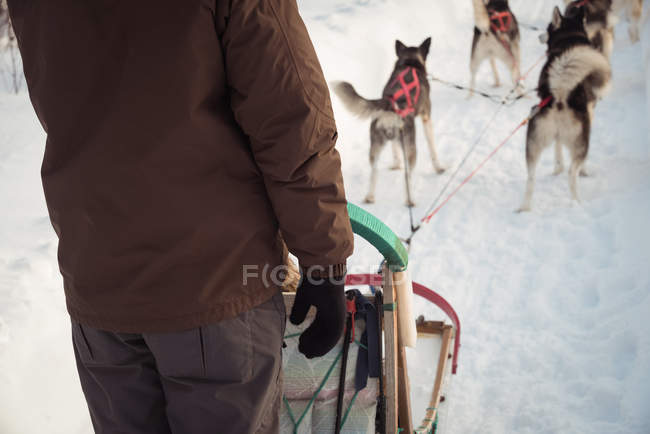 Mid-section of man on a sleigh ride with Siberian husky — Stock Photo