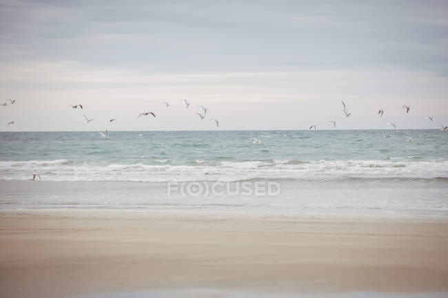 Mouettes survolant la plage près de la mer — Photo de stock