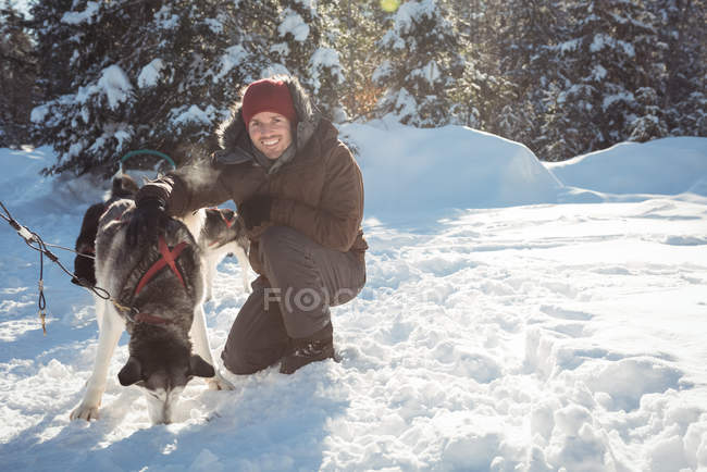 Smiling musher tying husky dogs to the sledge during winter on a snowy landscape — Stock Photo