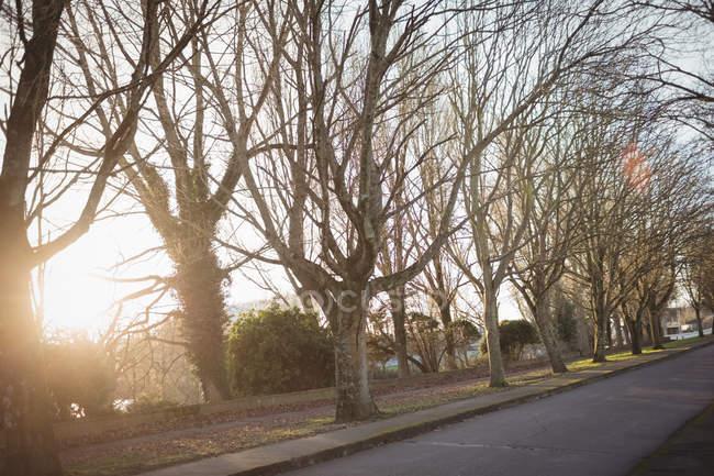 Vista exterior de árvores nuas alinhadas e estrada vazia em luz suave — Fotografia de Stock