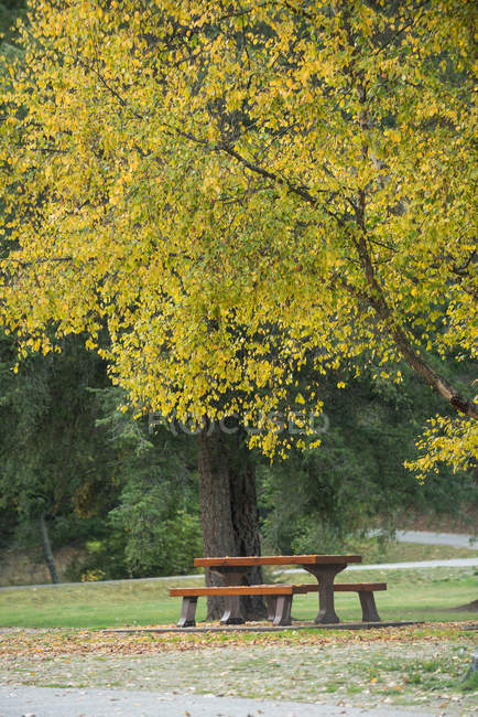 Empty bench under a tree in the park — Stock Photo