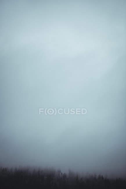 Ruhigen Blick auf Bäumen im Wald in der Dämmerung — Stockfoto