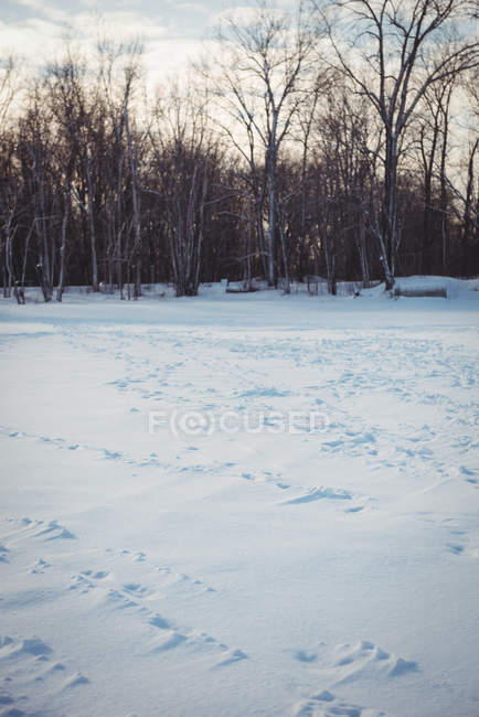 Snowy landscape with footprints on fresh snow in woodland with snow-capped trees — Stock Photo